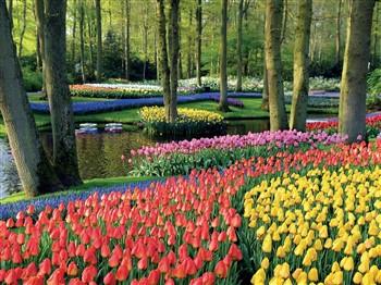 Keukenhof & Amsterdam, Holland