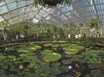 Kew Palace & Gardens, Richmond