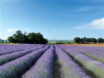 Denbies Wine, Ploughmans & Mayfield Lavender