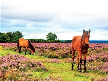 A Day in the New Forest with Lunch, Hampshire