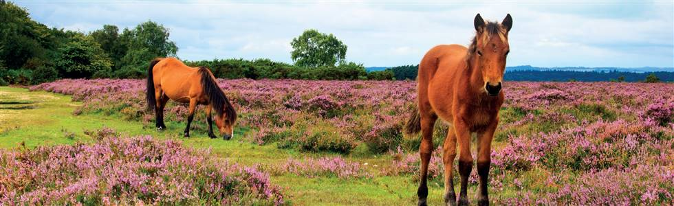 Autumn Tints of the New Forest