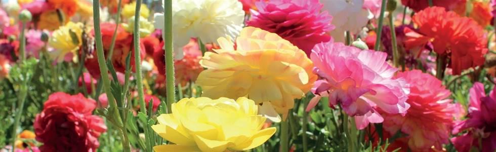 Sandringham Flower Show Overnight Break